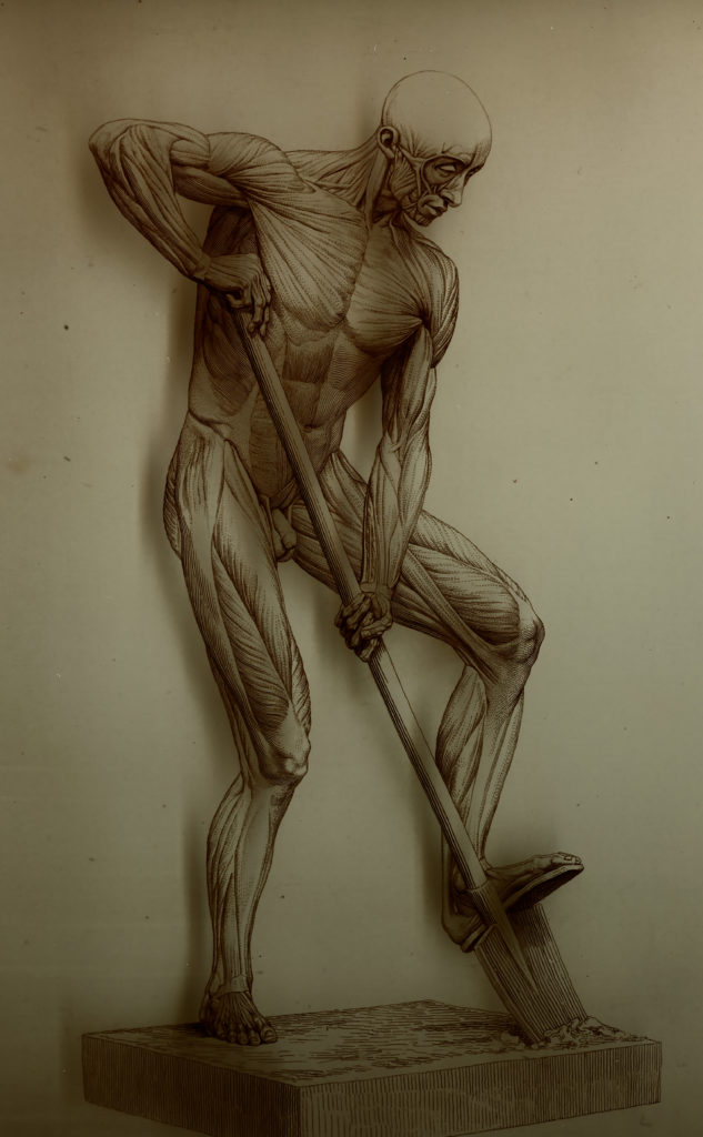 "Alphonse Lami ""Anatomie artistique Myologie superficielle du corps humain"" (1861), Full Standing Anatomical Figure Drawing Engraving"