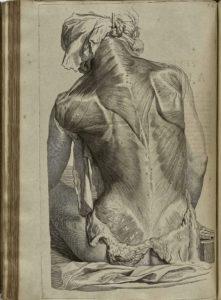 Gerard de Laraisse - Bidloo Ontleding 1690_27