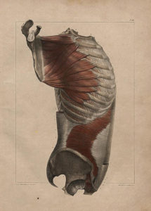 Complete treatise on the anatomy of man by Dr Bourgery With plates lithographed after nature by N. H. Jacob Author Bourgery Marc Jean 1797 - 1849 Published Paris 1831 - 1854