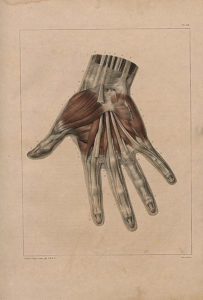 Complete treatise on the anatomy of man including operative medicine by Dr Bourgery With plates lithographed after nature by N. H. Jacob Author Bourgery Marc Jean