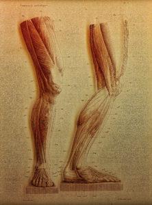 Elementi di anatomia fisiologica applicata alle belle arti figurative, Turin, 1837-39 - Francesco Bertinatti, (fl. mid-1800s) - [anatomist]; Mecco Leone - [artist]