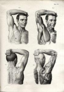 Elfinger Anton - Anatomie des Menschen die Knochen Muskel und Bänderlehre 1854