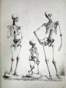 Francesco Bertinatti - Tavole Anatomiche Annesse agli Elementi di Anatomia Fisiologica Applicata alle Belle Arti Figurative 1837