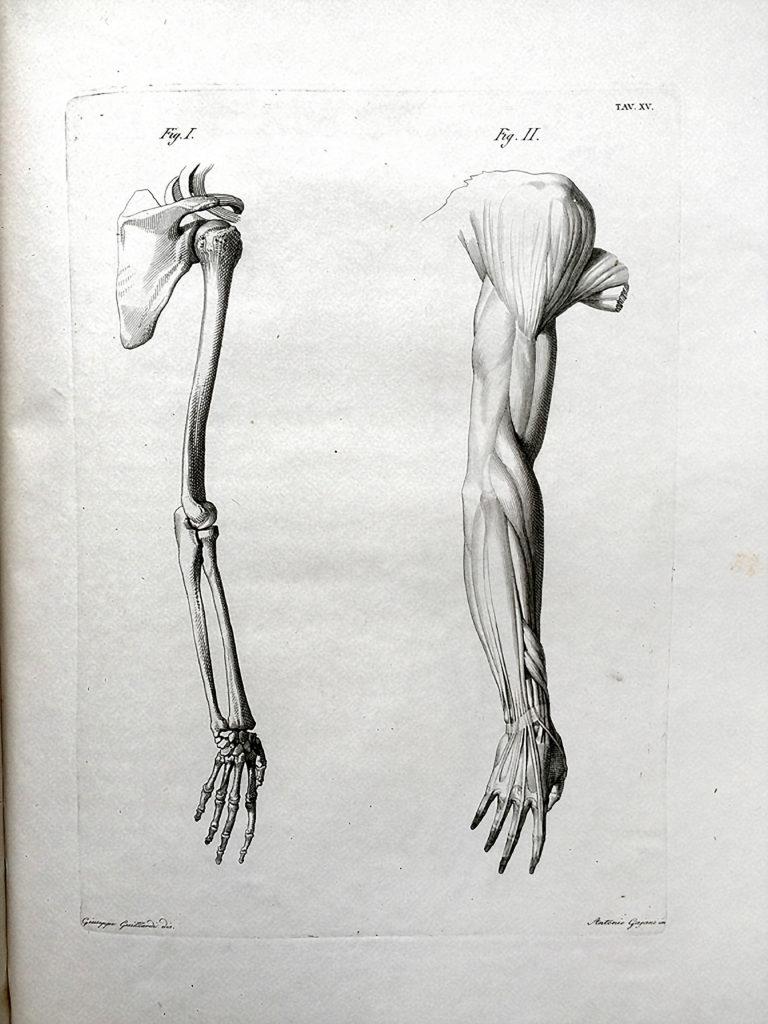 Giambattista Sabattini - TAVOLE ANATOMICHE PER LI PITTORI E GLI SCULTORI 1814
