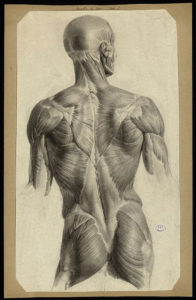 Jacob Nicolas Henri - Preparatory drawings for the Comprehensive Treatise on the Anatomy of Man by J. M. Bourgery_sl_sn_1810-1831