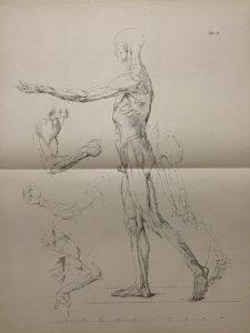 Johann Gottfried Schadow - Lehre von den Knochen und Muskeln von den Verhaeltnissen des Menschlichen Koerpers