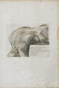 Tommaso Piroli Raccolta di Studj come Elementi del Disegno tratti dall'Antico da Raffaello e Michelangelo Con aggiunta di Alcune Tavole Anatomiche 1801