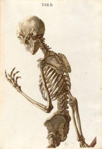 Christoph Jacob Trew: Tabulae osteologicae